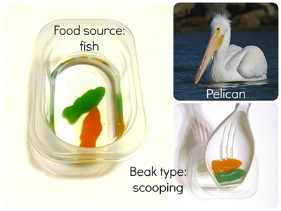 Montessori Tidbits:  Bird beak scoop pelican