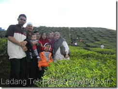 Teh Bharat Cameron Highlands 10