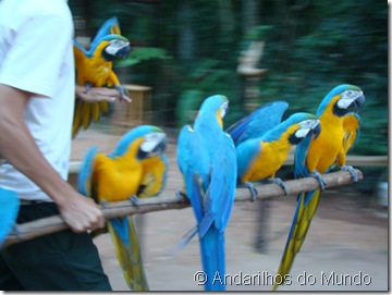Araras Puleiro Arara-Caniné Arara-Amarela Parque das Aves Foz do Iguaçu BlogTurFoz