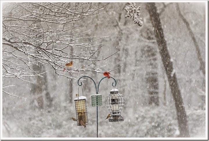 snow-2-25-15-1-4FB