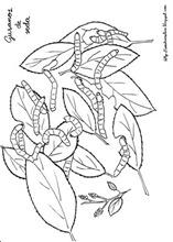 gusano de seda blogcolorear com  (2)
