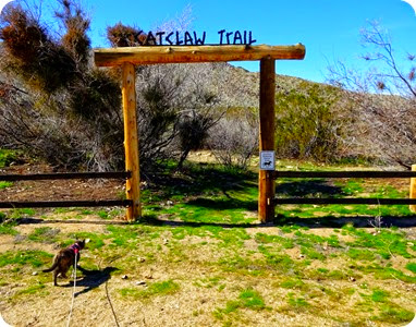 Catclaw trail