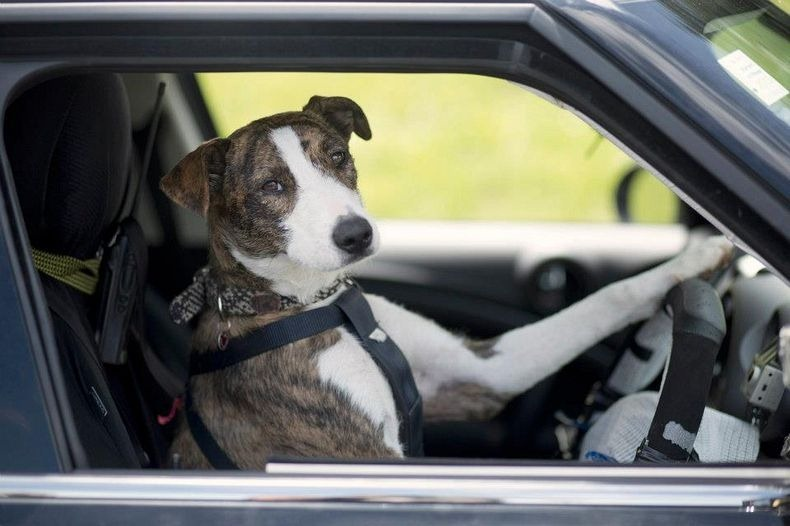 driving-dogs-0_1