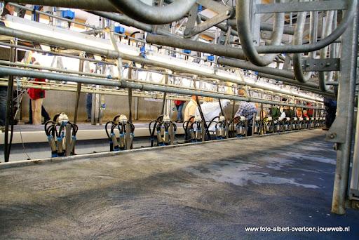 koeien kijken boer martij 18-06-2011 (33).JPG