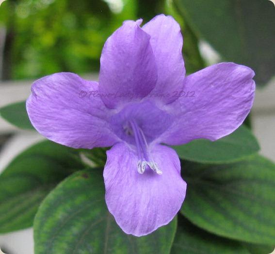 09-25-phil-violet