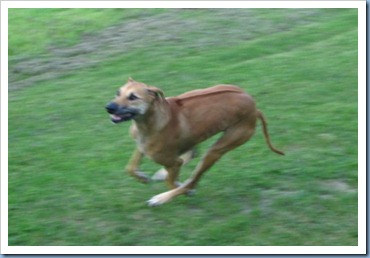 20110921_dogs_003