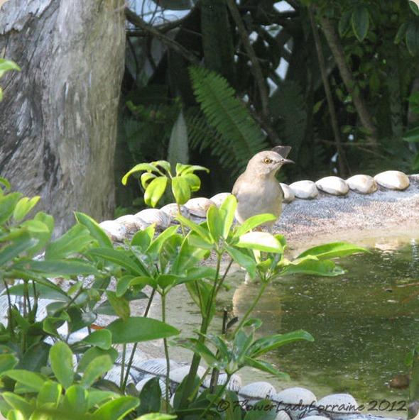 11-04-mockingbird2