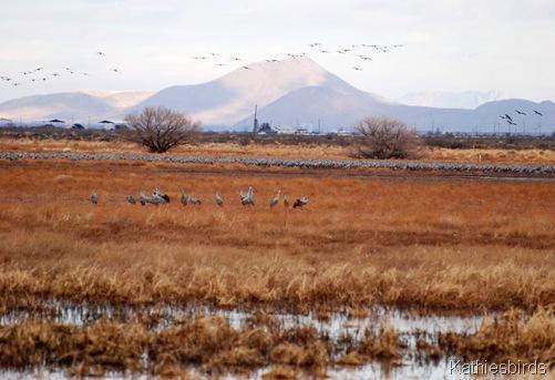 11. cranes-kab