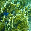Buck Island Reef - IMGP2347.JPG