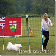 Dog Agility Contestant
