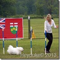 Dog Agility Contestant