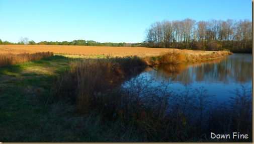 bonnies pond and soy field_002
