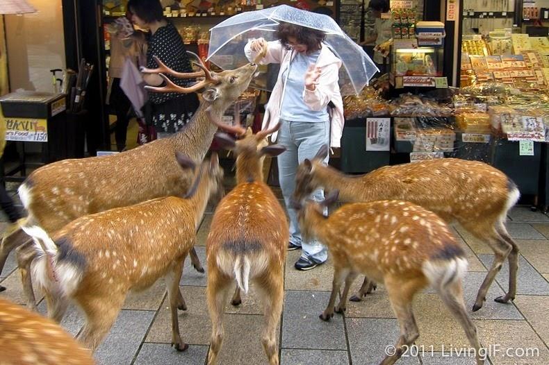 nara-deer-9
