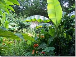 2012.08.01-004 jardin exotique
