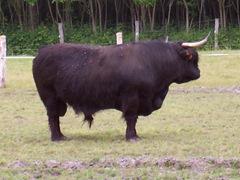 2004.05.26-011 aurochs