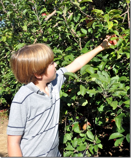 Max picking apple