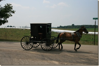 An Amish lady on her way into town - the long white rolls in the pasture are silage