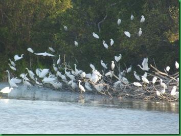 Eco Pond 025