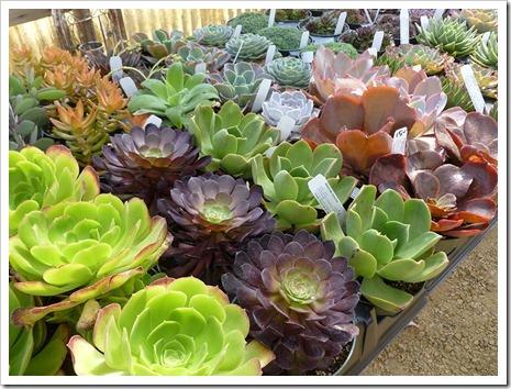 111001_succulent_gardens_52