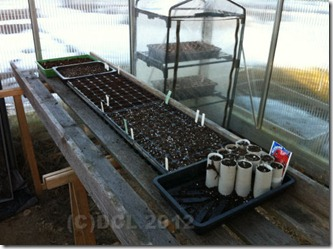Seedsinthegreenhouse