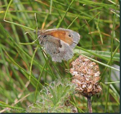 82-Small-Heath