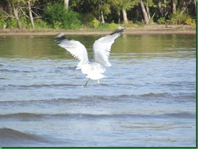 Illinois River Kayak #2 Wednesday 023