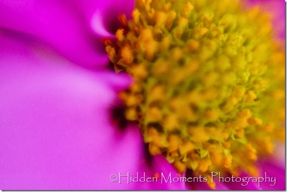 Macro daisy 3