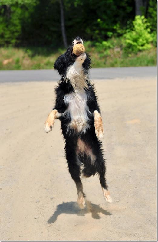 dog bath-4570