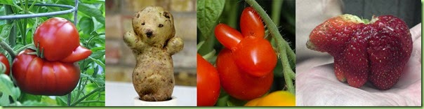 veggie critters copy