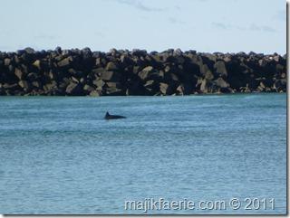 53 dolphin