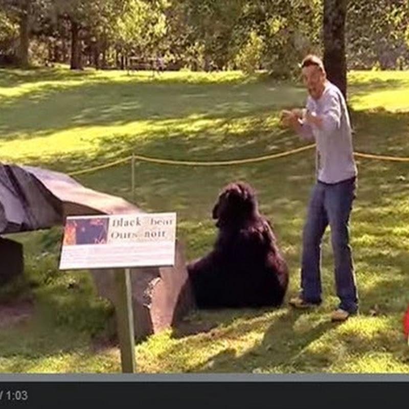Το βίντεο της αρκούδας
