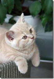10 -Fotos de gato buscoimagenes (40)