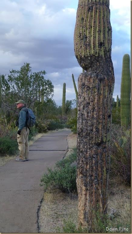 Saguaro NP West_058