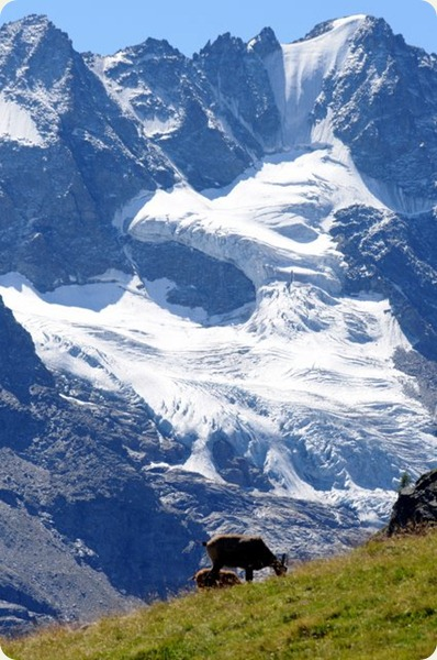 valle d'aosta montagna pascoli