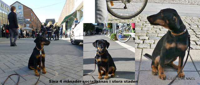 Sociala Sara