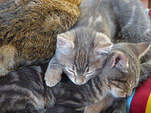 xmas_cat_1_01