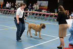 20130510-Bullmastiff-Worldcup-0194.jpg