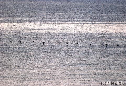 10. Canada geese-kab