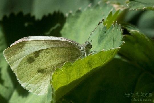 butterfly_20110712_vit