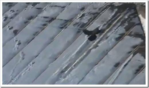 Crow roof tubing 02