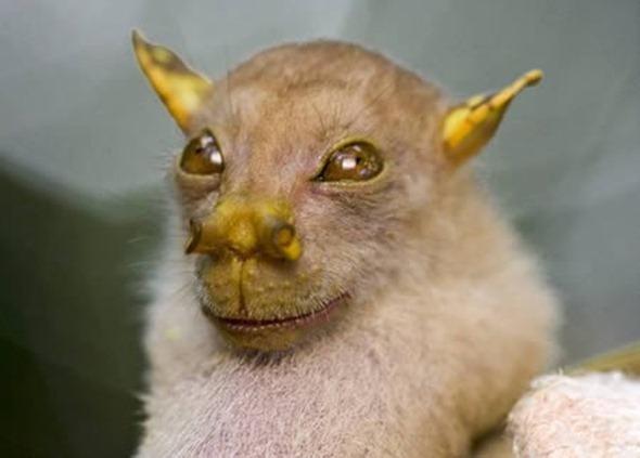 The Yoda Bat