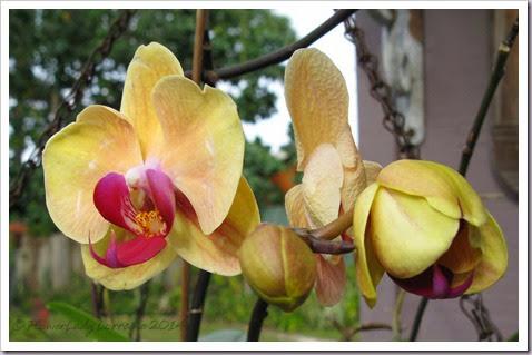 03-28-orchids