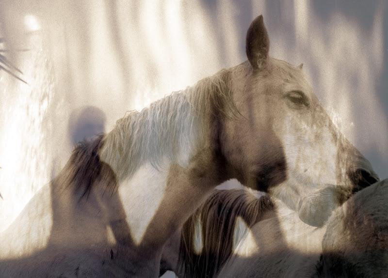 caballo y gitano