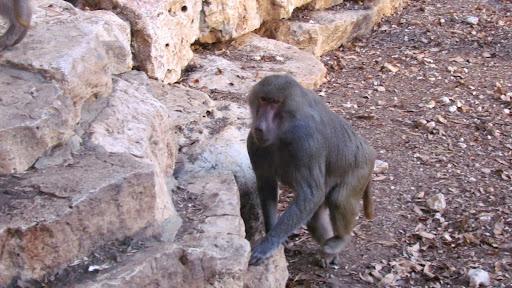 i makaka.jpg