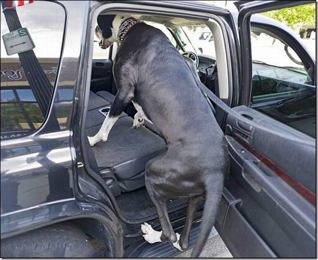 Nova Tallest Dog - 002