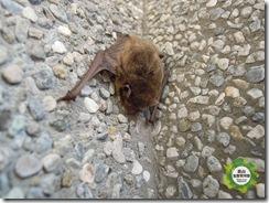 20120315員山生態教育館-蝙蝠收容 (2)