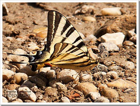 butterfly_20120813_A