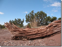 2012-04-15 Petrified Wood, Fry Canyon, UT (4)
