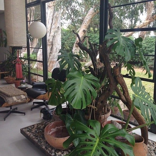 jungle_mood_in_interior