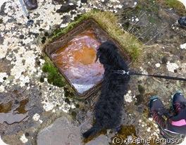 dogling investigates burble